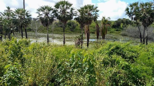 Fazenda em Monte Alegre - Com 80,52 Ha -Com Açude - Foto 16
