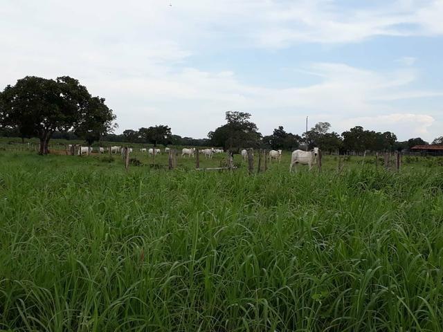 Fazenda - Foto 8