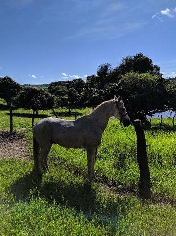 Vendo cavalo bom de sela - Foto 2