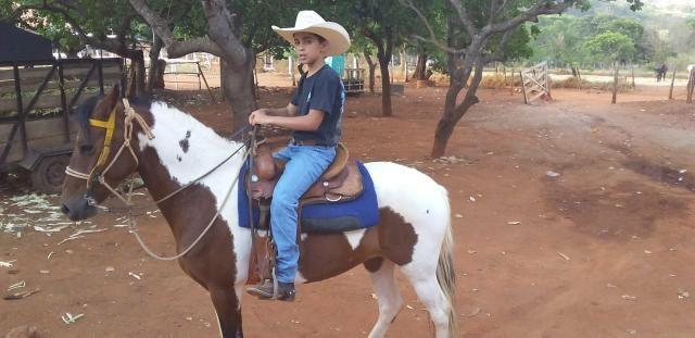 Venda de cavalo - Foto 2