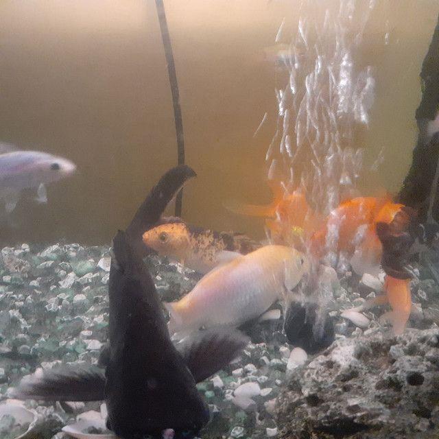 Aquário com móvel com 15 peixe grande,bomba peneira  - Foto 4