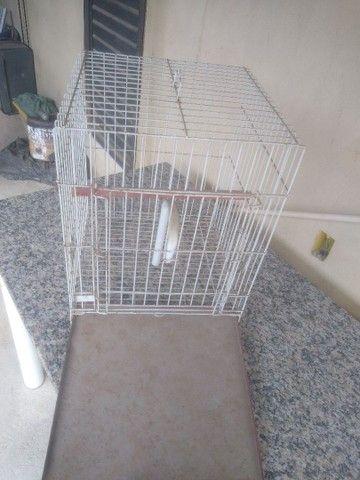 Gaiola grande, era de um papagaio - Foto 4