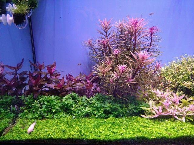 Plantas aquáticas - Foto 3