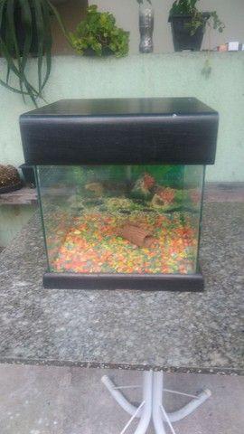 vendo aquario - Foto 4