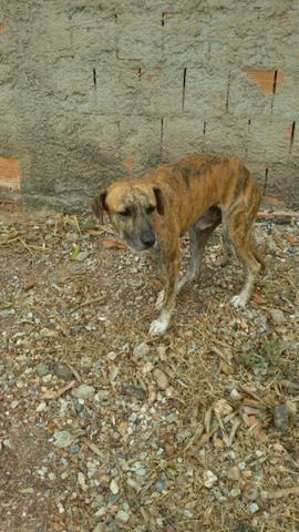 Cachorro abandonado, ajuda para adoçao