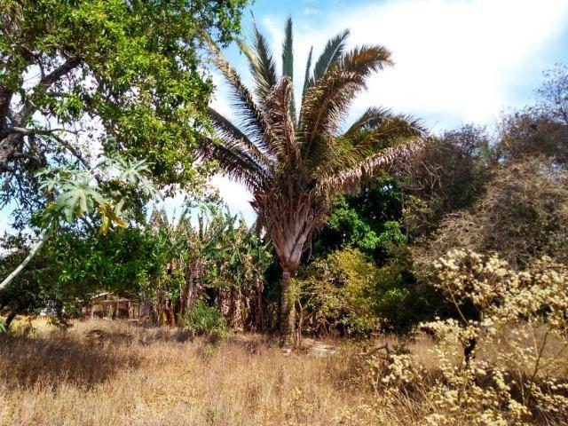Chácara Aragoiânia, 14,65 alqueires, (71,71 hectares), - Foto 19