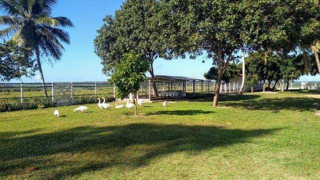 Fazenda em Monte Alegre - Com 80,52 Ha -Com Açude - Foto 14