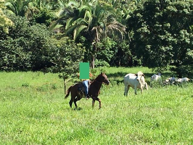 Fazenda a 4 km da BR 364 antes da Serra de São Vicente Prox do posto chapadão - Foto 15