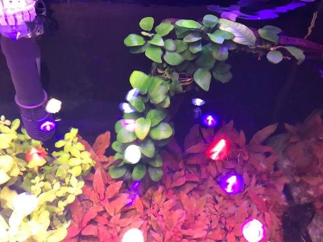 Plantas aquáticas - Foto 5