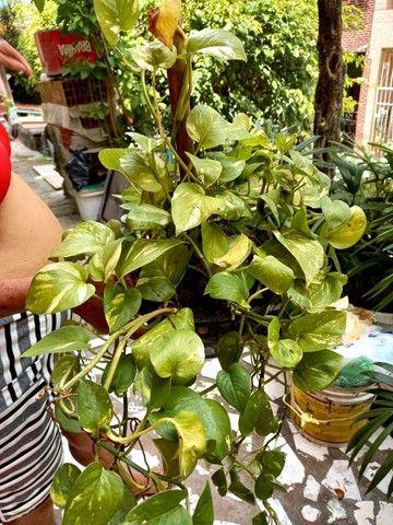 Mudas de plantas - Foto 3