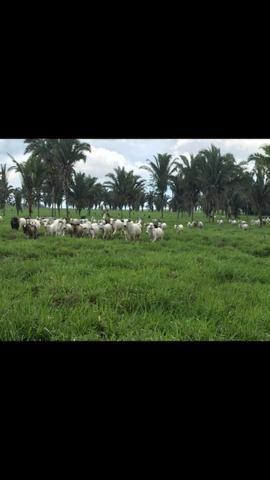Fazenda a Venda - Mamore - Ro