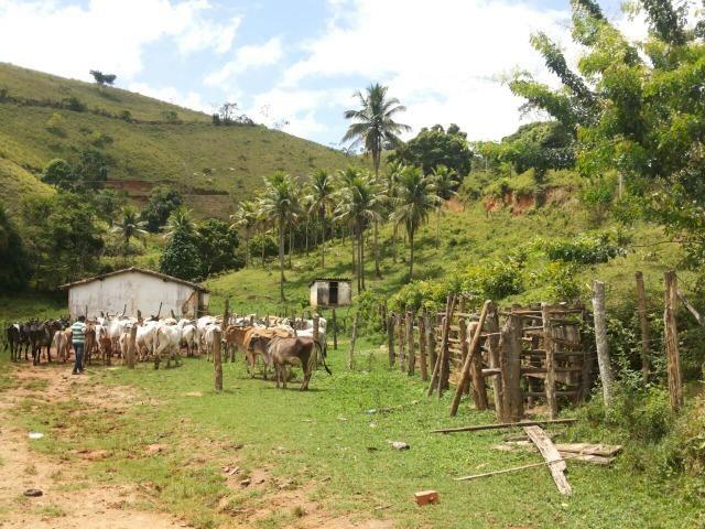 Propriedade rural com 140 HEC - Foto 6
