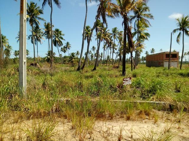 Terreno em São José da Coroa grande - Foto 3