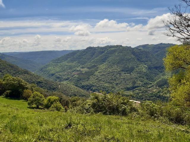 Excelente Chácara próximo a Flores da Cunha - Foto 4