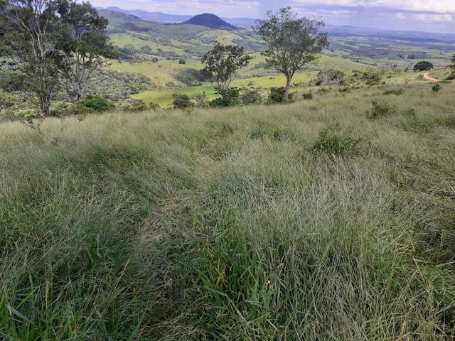 Arrenda -Fazenda Agricultura e Pecuária- - Foto 15
