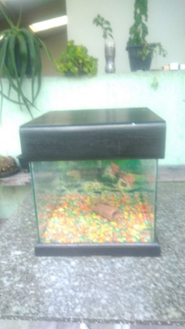 vendo aquario - Foto 3
