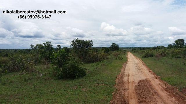 Fazenda 3.910 hectares vale do xingu mt nikolaiimoveis