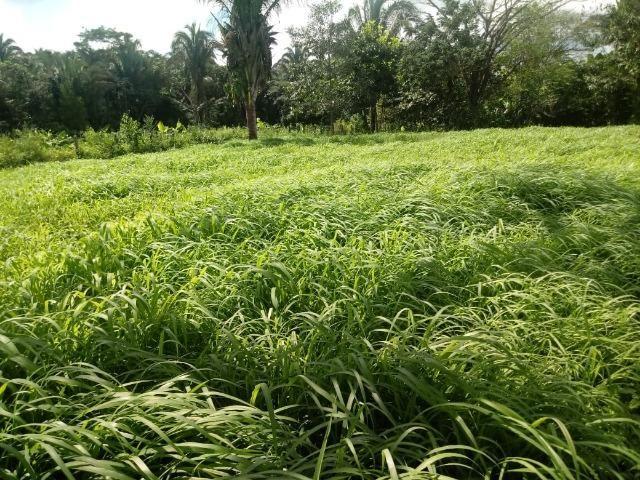 Fazenda 785 hectares ha 65 km de Jangada - Foto 8