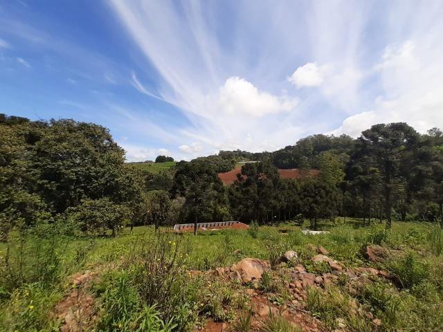 Excelente Chácara próximo a Flores da Cunha - Foto 11