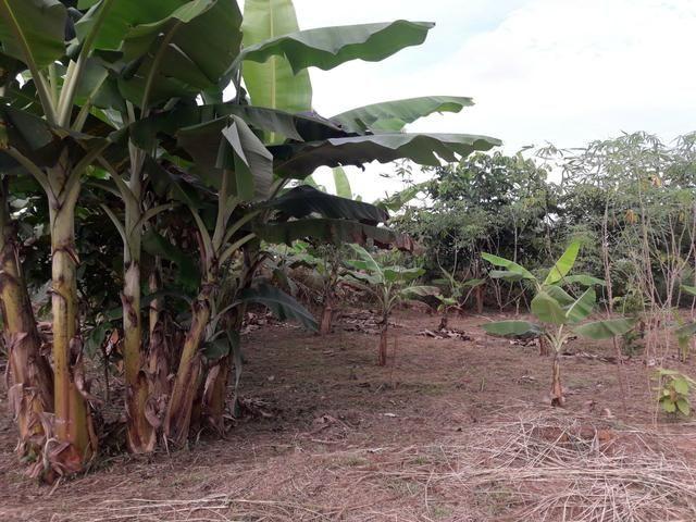 Vendo terreno na Vila do V - Foto 2