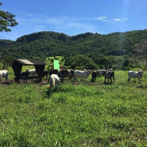 Fazenda a 4 km da BR 364 antes da Serra de São Vicente Prox do posto chapadão - Foto 16