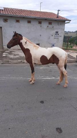 Venda de cavalo - Foto 3