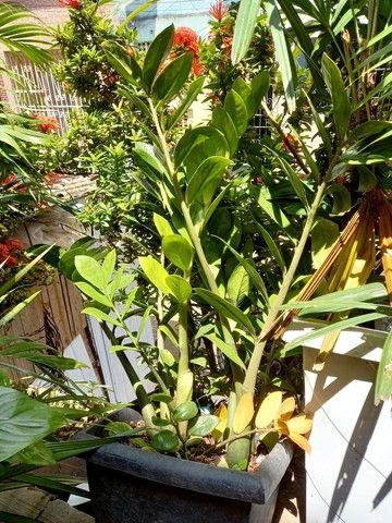 Mudas de plantas - Foto 6