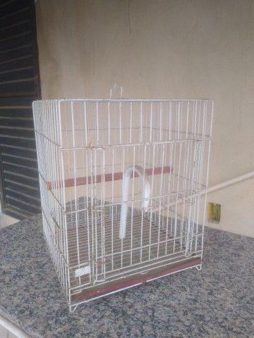 Gaiola grande, era de um papagaio - Foto 5