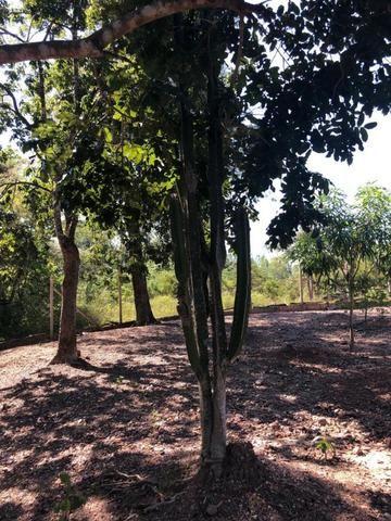 Chacara em Sto Antonio Leverger 110metros de Beira de Rio C/Tanque de Peixes Arvores Fruti - Foto 15