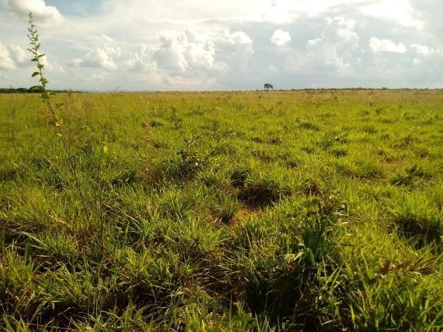 Fazenda 785 hectares ha 65 km de Jangada - Foto 11