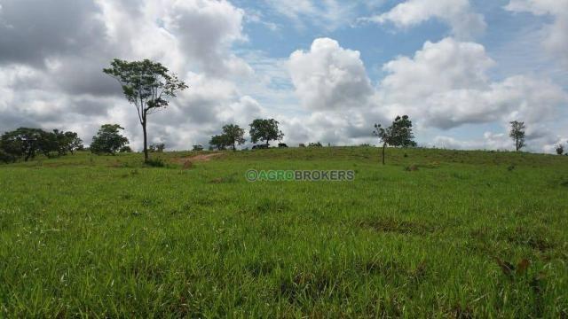 Sítio 19,5 ha em serra de são vicente - Foto 2