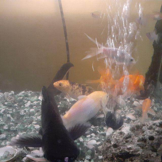 Aquário com móvel com 15 peixe grande,bomba peneira  - Foto 3