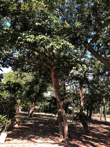 Chacara em Sto Antonio Leverger 110metros de Beira de Rio C/Tanque de Peixes Arvores Fruti - Foto 19