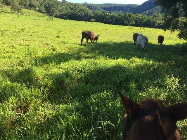 Fazenda a 4 km da BR 364 antes da Serra de São Vicente Prox do posto chapadão - Foto 4