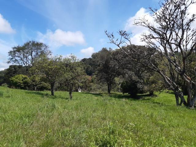 Excelente Chácara próximo a Flores da Cunha - Foto 7