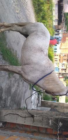 Cavalo de picado - Foto 2