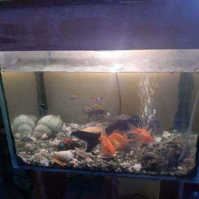 Aquário com móvel com 15 peixe grande,bomba peneira  - Foto 6
