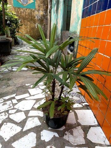 Mudas de plantas - Foto 5