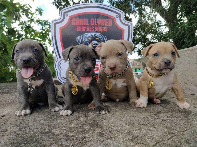 Bully, Monster, Pitbull - Foto 4