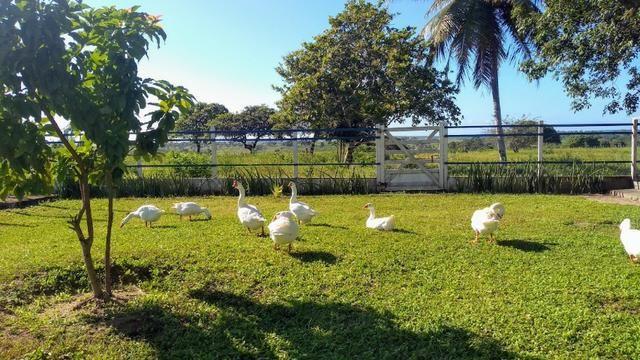 Fazenda em Monte Alegre - Com 80,52 Ha -Com Açude - Foto 15