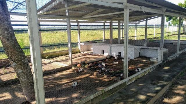 Fazenda em Monte Alegre - Com 80,52 Ha -Com Açude - Foto 6