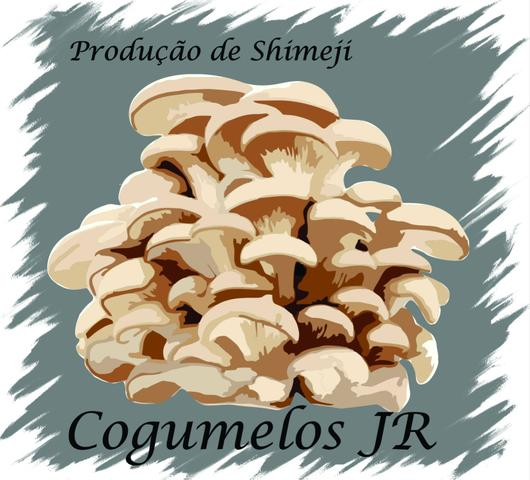 Cogumelos shimeji