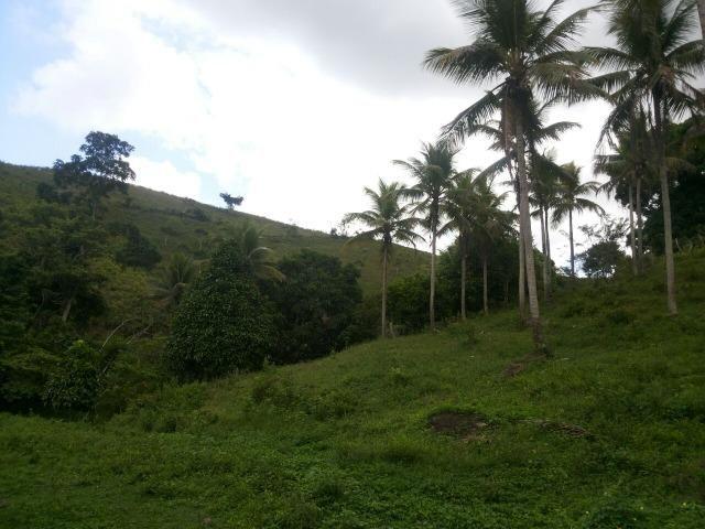 Propriedade rural com 140 HEC - Foto 4