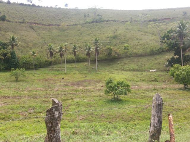 Propriedade rural com 140 HEC - Foto 7