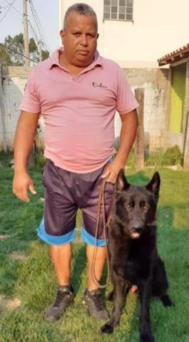 Adestramento e venda de cães de guarda prontos - Foto 3