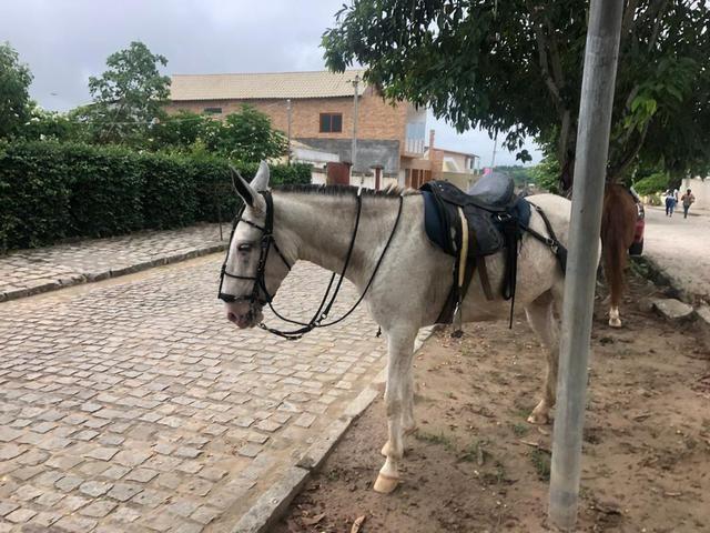 Burra chique - Foto 3