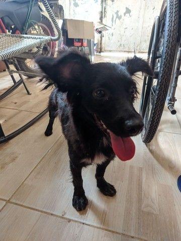 Doação de cachorrinha em fortaleza-ce - Foto 2