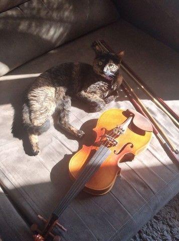 Vendo  violino - Foto 2
