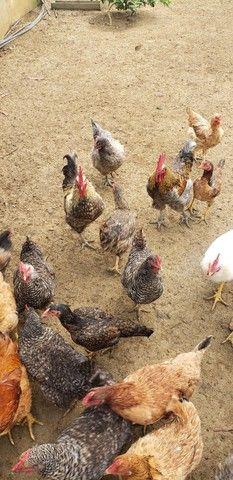 Vende-se galinhas e peru  - Foto 3