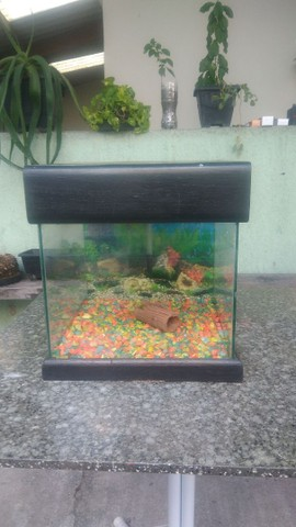 vendo aquario - Foto 5